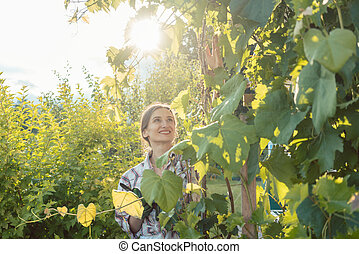 Woman in garden checking the grapevines