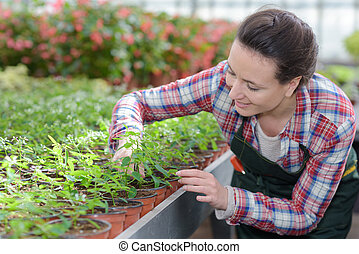 woman in greenhouse caring her plants