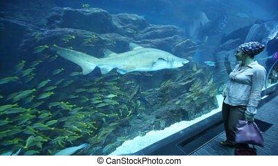 woman in oceanarium moving backwards looking at fish - young...