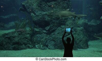 Woman in oceanarium with sharks