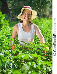 woman  in plant of potato