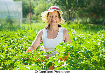 woman  in plant of potato