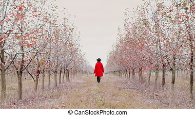 Woman in red coat walking alone between trees in apple...