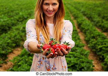 Woman in spring dress, holding hands full of freshly picked strawberries, with strawberry orchard field in background