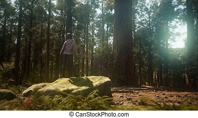 Woman in Yosimite national park near sequoia in California,...