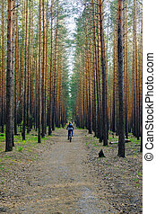 woman is cycling in pine forest