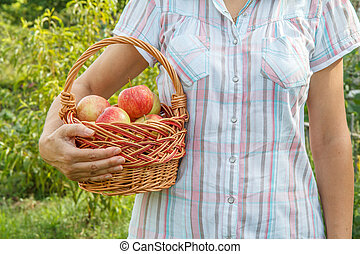 Woman is holding wicker basket with red apples in her hand.