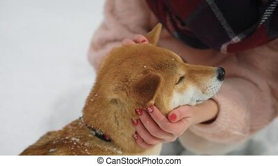 woman is stroking by hands a muzzle of red dog standing outdoors in a winter day on a snowy ground, close-up
