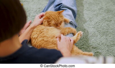 Woman is stroking cute ginger cat. Cozy family evening at...
