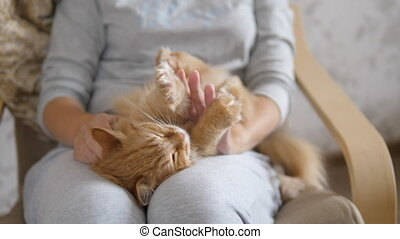 Woman is stroking cute ginger cat on her knees. Fluffy pet purring with pleasure. Cozy home.