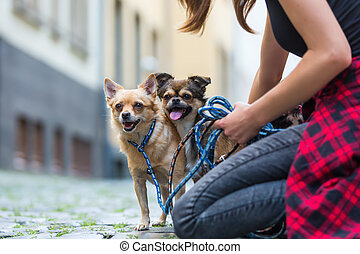 woman kneels with a chihuahua and and a chihuahua hybrid dog on a road