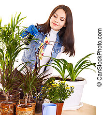 Woman looking after houseplant - Woman looking after...