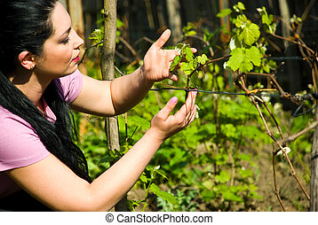 Woman looking and checking new vine leaf