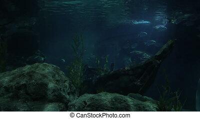 Woman looking at fish in oceanarium