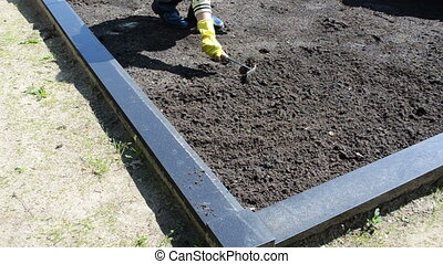 woman loosen grave ground - woman hands with rubber gloves...