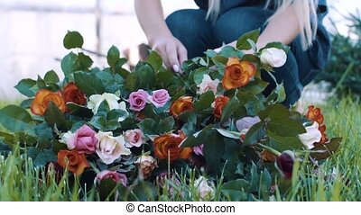 Woman makes a bouquet in the rose garden