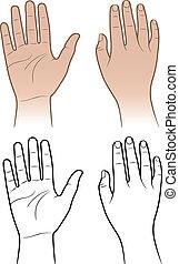 Woman, man hands