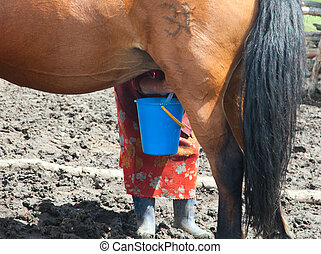 Woman milking a mare on a farm that would make the mare