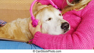 Woman mounting headphone on dogs ear on sofa 4k - Close-up...