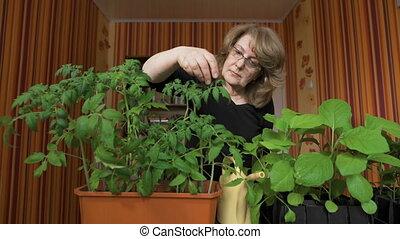 Woman nerd. Home greenhouse, new varieties of vegetable ...