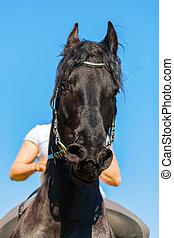 woman on a Friesian horse