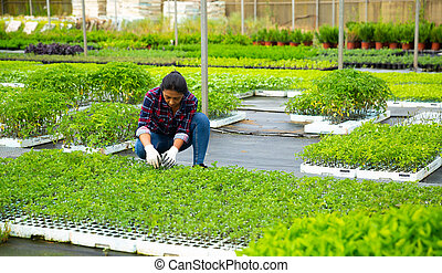 Woman owner of greenhouse checking potted seedlings of tomatoes