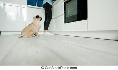 Woman pet the dog while cooking on the kitchen.