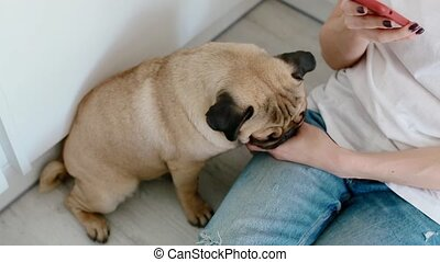 Woman pet the dog while using smartphone on the kitchen. Pug...