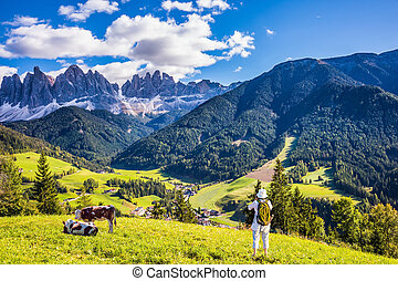 Woman photographs at Dolomites and cows