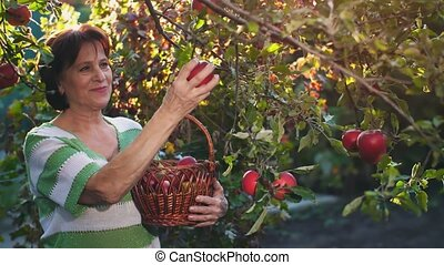 Woman Pick an Apple