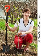 woman planting fruit tree