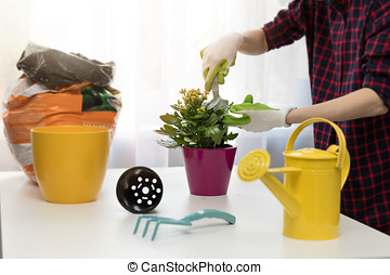 woman planting houseplant in pot at home