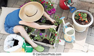 Woman planting petunia seedlings