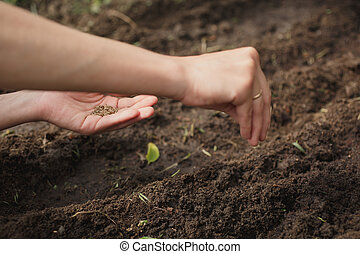 woman planting seeds in the garden