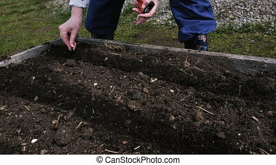 Woman plants a carrot in the garden