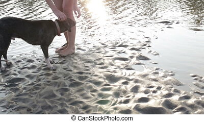woman playing a dog on the beach