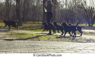 Woman playing with bernese shepherd dog puppies - Slow...