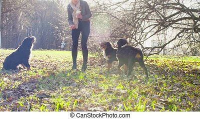 Woman playing with bernese shepherd dog puppies