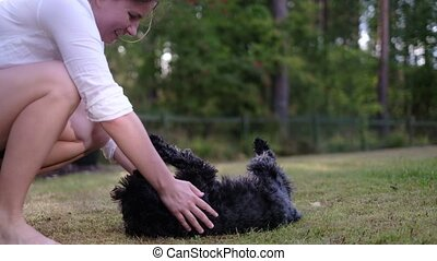 Woman playing with small cute black schnauzer on the back yard teasing him.