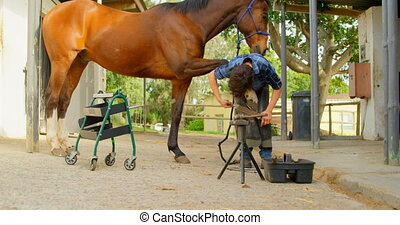 Woman polishing horseshoes in horse leg 4k - Distant view of...