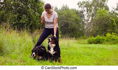 Woman posing with two bernese shepherd dogs on the meadow...