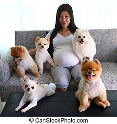 woman pregnant and pomeranian dog cute pets in living room