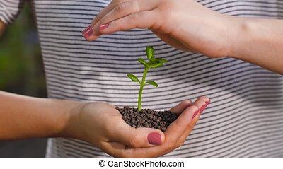 Woman protecting small plant concept - Human hands holding...