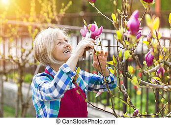Woman pruning magnolia tree branches in her garden