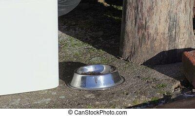Woman put cat food in bowl