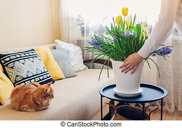 Woman puts pot with spring flowers on table. Housewife taking care of coziness in apartment. Interior and decor