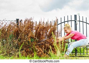 Woman removing dried thuja tree from backyard
