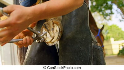 Woman removing horseshoes from horse leg 4k - Mid section of...