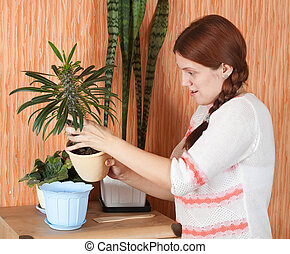 woman replants Pachypodium cactus to new pot at her home