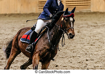woman rider in horse